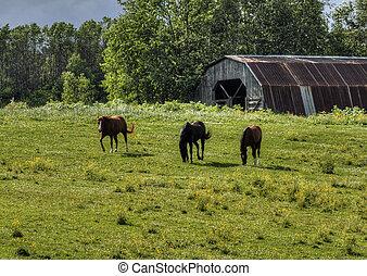 Grazing horses 89