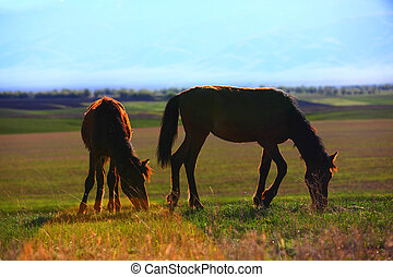 grazing horses in sunset