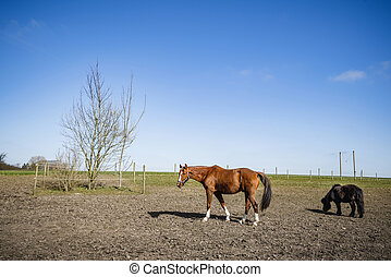 Grazing horses on a field at a farm
