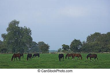 Peaceful rural scene of horses grazing in a paddock.