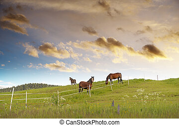 Grazing horses in beautiful rural landscape at sunset