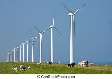 Grazing sheep in front of a row big windturbines in the ...