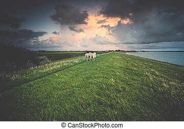 Grazing sheep on the seawall during sunset