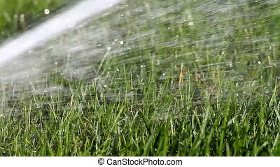 Greasy Grass WATERING BACKGROUND HD
