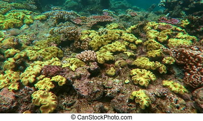 Great Barrier Reef Queensland - Coral reef marine life in...
