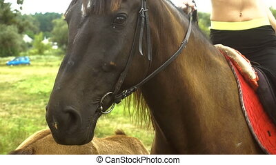 great beautiful kind eyes horse closeup - great young...