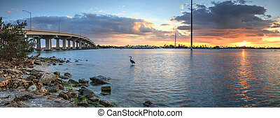 Great blue heron Ardea herodias stands in the water as the sun sets over the bridge