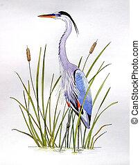Great Blue Heron - Ardea herodius. Hand drawn on paper.