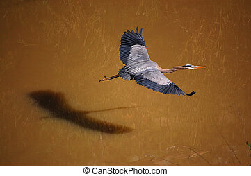 Great Blue Heron at Los Mochos Creek in Suburban Pleasanton...