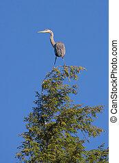 Great Blue Heron Balanced in the Sky