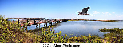 Great blue heron over a Bridge along the peaceful and tranquil marsh of Bolsa Chica wetlands