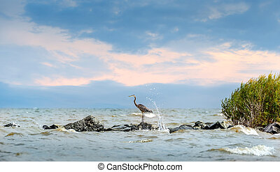 Great Blue Heron standing on jetty with water splashing -...