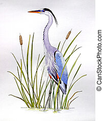 Great Blue Heron - Ardea herodius. Hand drawn on paper.
