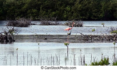 Great blue Heron with Flamingo