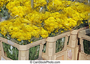 great bunch of flowers for sale by wholesale florist in the flow