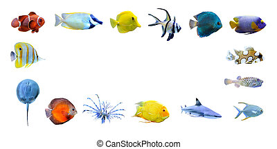 Great collection of a tropical fish