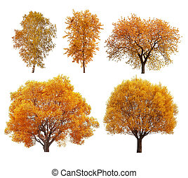 Great collection of autumn trees