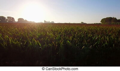 Great Corn Fields Farmland at Sunrise - Flying over the corn...