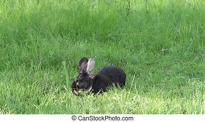 Great cute rabbit sits on a meadow and eats green grass