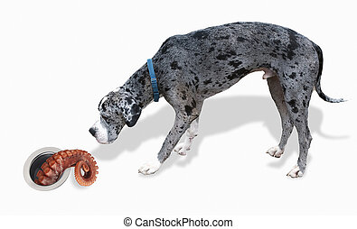 Great Dane and the Octopus. - Big Great Dane looks at ...