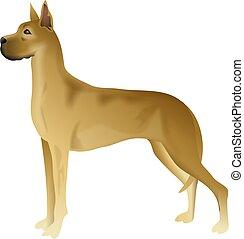 Great Dane - great dane dog breed