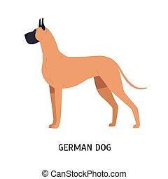 Great Dane or German Mastiff. Gorgeous large dog of short...