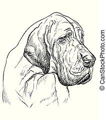 Great Dane vector hand drawing portrait - Great Dane vector...