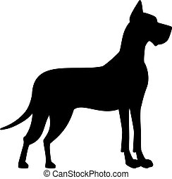 Great dane with uprights ears