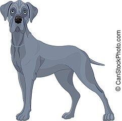 Great Danes Dog