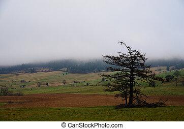 destroyed tree in fog