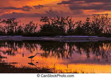 Great Egret (Ardea alba) silhouetted in a lagoon at sunset - Estero Island, Florida