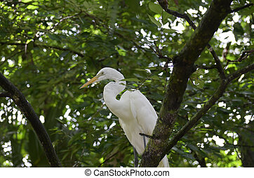 Great Egret Bird Sitting in the Top of a Tree