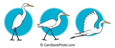 Great Egret - Great egret in stages of taking off