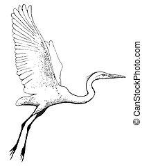 Great Egret (Ardea alba) sketch in flight