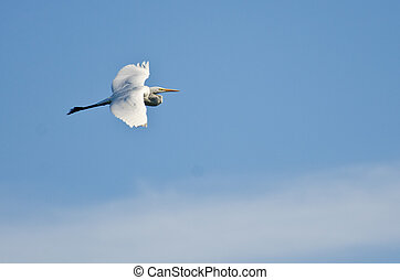 Great Egret Flying in Cloudy Sky