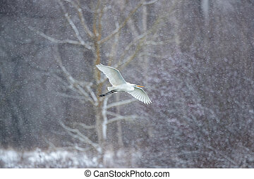 Great egret flying white snowing