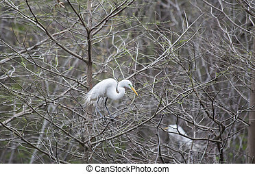 Great Egret Perched in a Tree