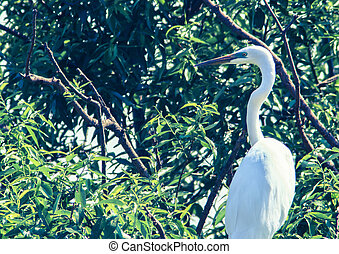 Great Egret perched on a tree