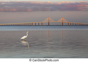 Great Egret with the Sunshine Skyway Bridge in the background