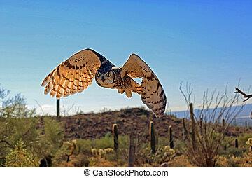 Backlit great horned owl flying over the desert