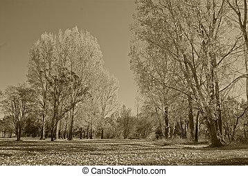 park in sepia