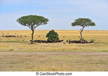 Great Migration of wildebeest