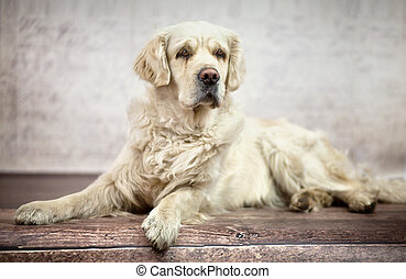 Great photo of white friendly dog - Great photo of white...
