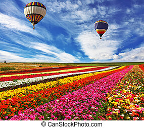 Great rural field with flowers