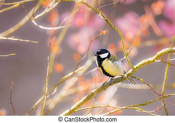 great, siddende, tit, træ branch, fugl