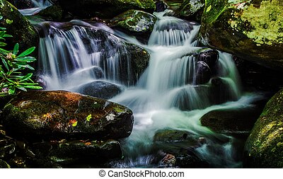 Great Smoky Mountain Spring