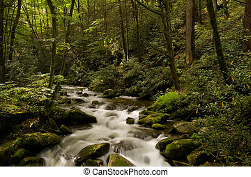 Great Smoky Mountains national park - Mountain stream in ...