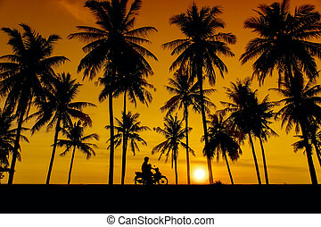 great sunset and tree silhouette