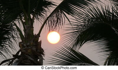 Great sunset red sun against background of palm leaves -...