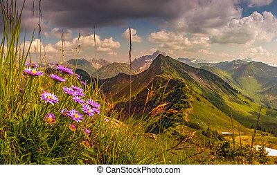 Great sunset view from high mountain with flowers in foreground. Allgau, Alps, Austria, Germany.